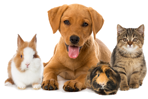 Hunde, Katzen, Kleintiere