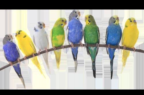 Vögel & Gefieder